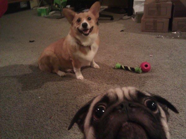 Selfie, Photobombing